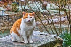 Kot na mroźnym moście fotografia royalty free
