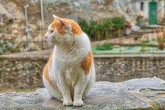 Kot na mroźnym moście zdjęcia stock