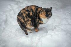 Kot na śniegu Obraz Stock