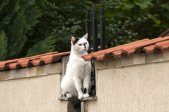 Kot na ogród ścianie Obrazy Stock
