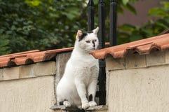 Kot na ogród ścianie Zdjęcia Royalty Free