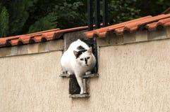 Kot na ogród ścianie Zdjęcie Royalty Free