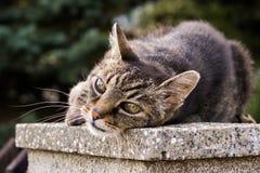 Kot na ogrodzeniu Sistani obrazy stock