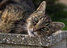 Kot na ogrodzeniu Sistani zdjęcia stock