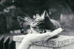 Kot na ogrodzeniu Sistani obraz royalty free