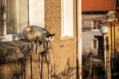 Kot na okno Zdjęcia Stock
