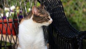 Kot Na ostrzeżeniu Zdjęcie Stock