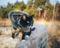 Kot na plenerowej przygodzie Fotografia Royalty Free