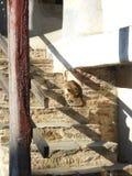 Kot na schodkach Obrazy Stock