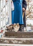 Kot na spacerze na zima dniu obraz stock