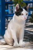Kot na tarasie, Paros, Grecja zdjęcia stock