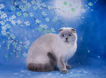 Kot na tle błękitna księżyc Zdjęcia Royalty Free