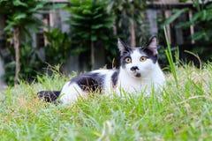 Kot na trawie Obraz Stock