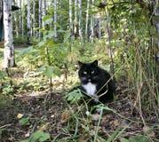 Kot na trawie Zdjęcie Stock