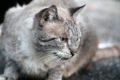 Kot na ulicie Zdjęcie Royalty Free