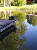 Kot na wodzie Fotografia Royalty Free