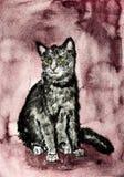 Kot na zaskamlającej czerwieni tle Obrazy Stock