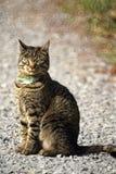 kot na zewnątrz Fotografia Royalty Free
