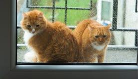 Kot na zewnątrz okno Zdjęcia Royalty Free