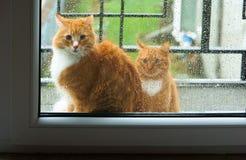 Kot na zewnątrz okno Fotografia Royalty Free