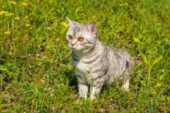 Kot na zielonej trawie Zdjęcia Royalty Free