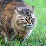 Kot na zielonej trawie Obrazy Stock
