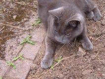 Kot na ziemi Obrazy Stock