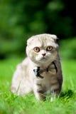kot natura śliczna mała obraz stock