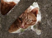 kot nie jest dziki brown Obrazy Stock