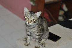 kot niegrzeczny zdjęcia stock