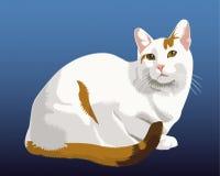 kot nieśmiały Zdjęcia Stock