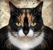 kot niemożliwy obrazy stock