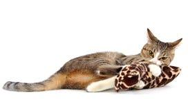 kot niepoczytalność obrazy stock