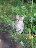 Kot nierówny fotografia royalty free