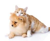 Kot obejmuje psa patrzeć kamerę Odizolowywający na białym backgr Obrazy Royalty Free