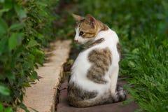 Kot obraca z powrotem w ogródzie Zdjęcie Royalty Free