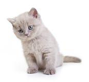Kot odizolowywający na białym tle. Obrazy Royalty Free