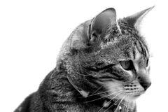 kot odizolowywający Fotografia Royalty Free