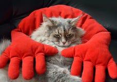 Kot odpoczywa na czerwonej poduszce Obrazy Stock