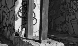 Kot odpoczywa pod słońcem obrazy stock