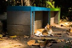 Kot odpoczywa pod słońcem w parku Zdjęcie Stock