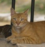 Kot odpoczywa w cieniu Zdjęcia Royalty Free