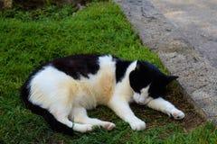 Kot odpoczywa w trawie zdjęcie stock
