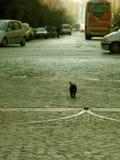 kot odprężona zdjęcie royalty free