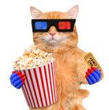 Kot ogląda film obrazy stock