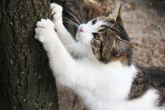 Kot ostrzy swój pazury Obraz Royalty Free