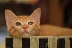 Kot pójść w pudełko Obrazy Royalty Free