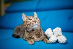Kot, paskująca, błękitna kanapa, dziecko łupy Obraz Stock