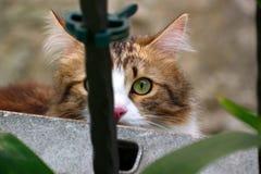 Kot patrzeje bezpośrednio przy kamera obiektywem z jeden okiem za ogrodzenie barem zdjęcia stock