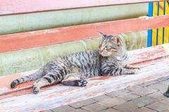 Kot patrzeje coś Obrazy Royalty Free